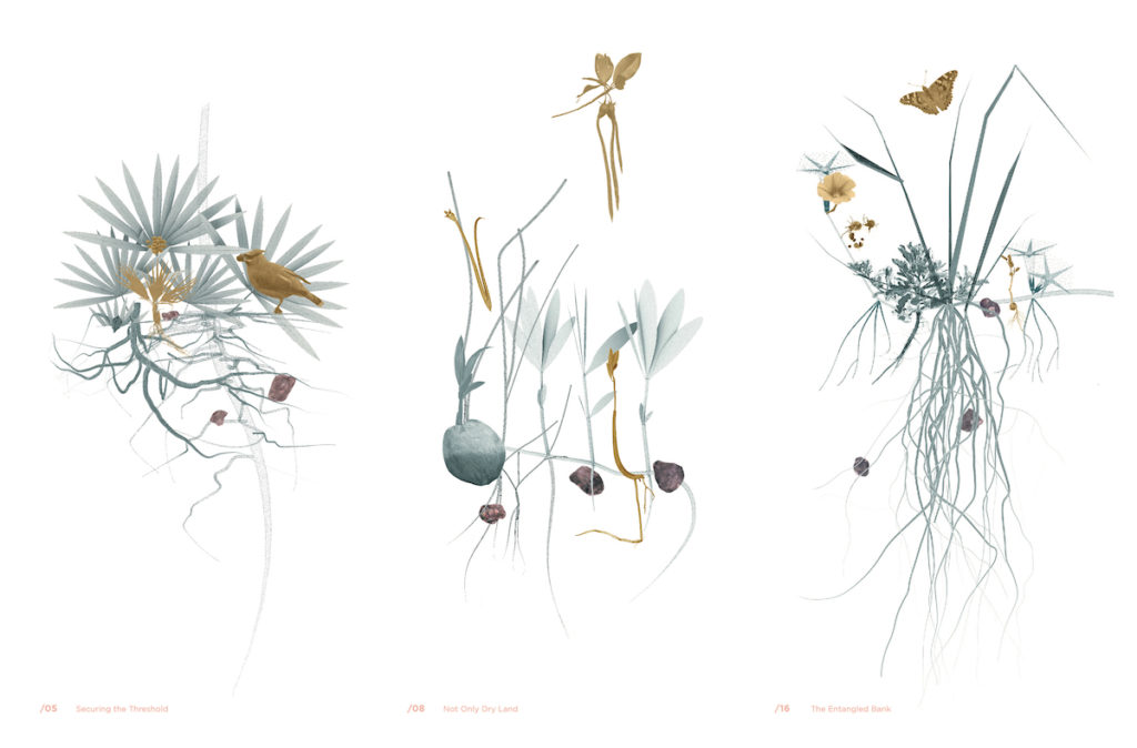 Drawings of vegetation