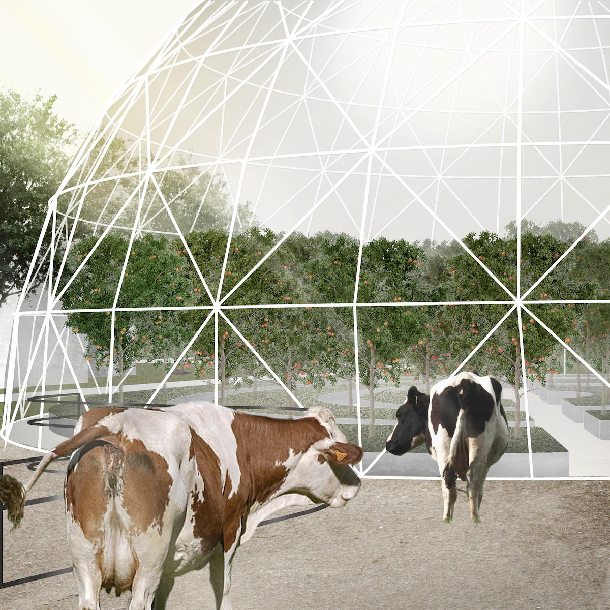 rendering with cows and dome