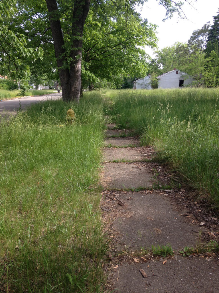 Tall grass overtakes sidewalks, city strips, and fire hydrants during Detroit summers